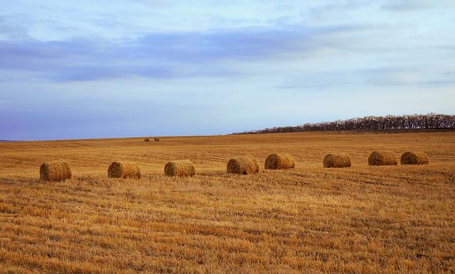 Фермери можуть отримати сертифікати про форс-мажорні обставини - посуха, зміна клімату, збитки, засідання - hay 19719 640
