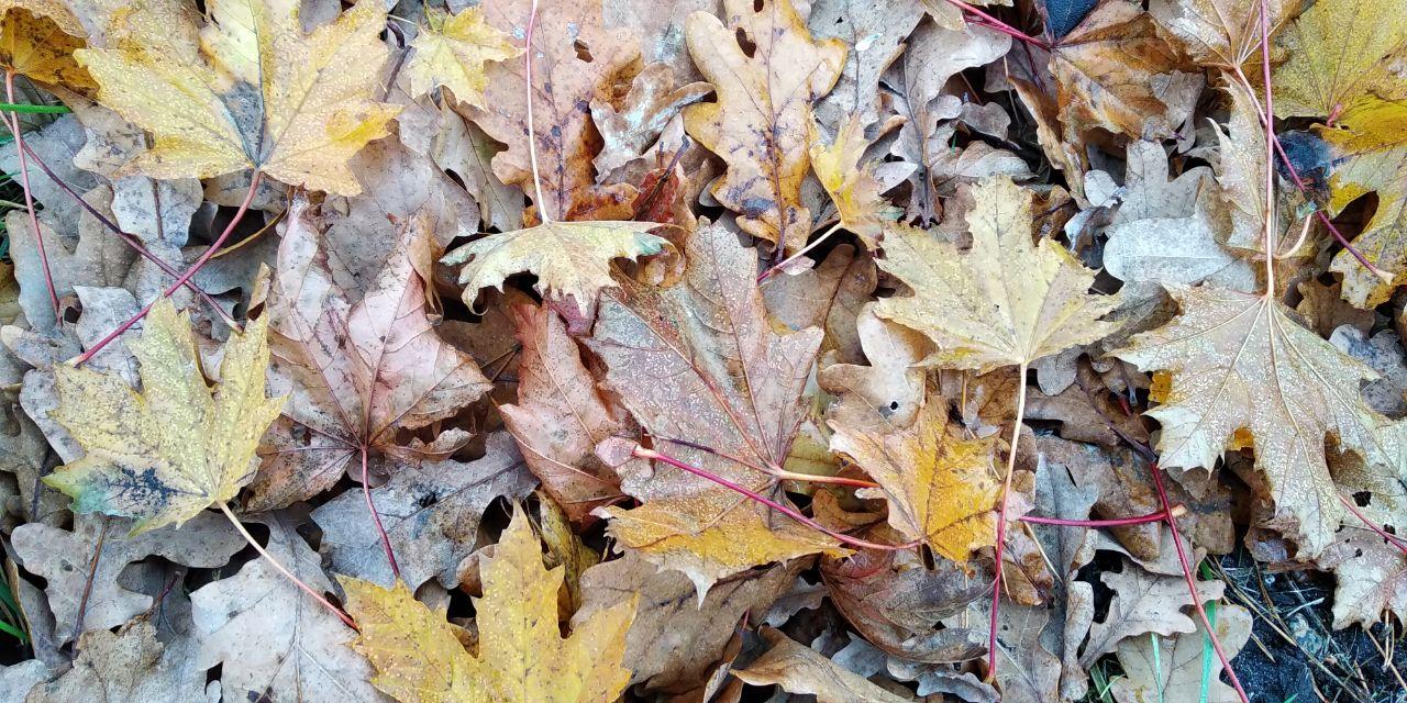 Цьогорічний листопад на Київщині був теплішим, ніж зазвичай - температурні рекорди, температура повітря, погода, підвищення температури, осінь - 01 lystopad