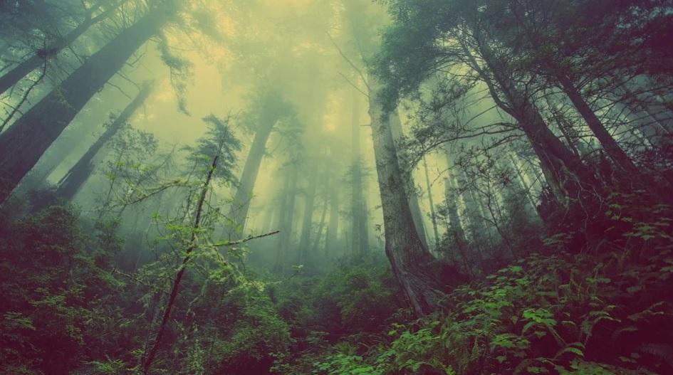 В Україні створили онлайн-мапу пралісів - лісовий фонд, ліси, ліс, дерево, Дерева - 03 mapa2