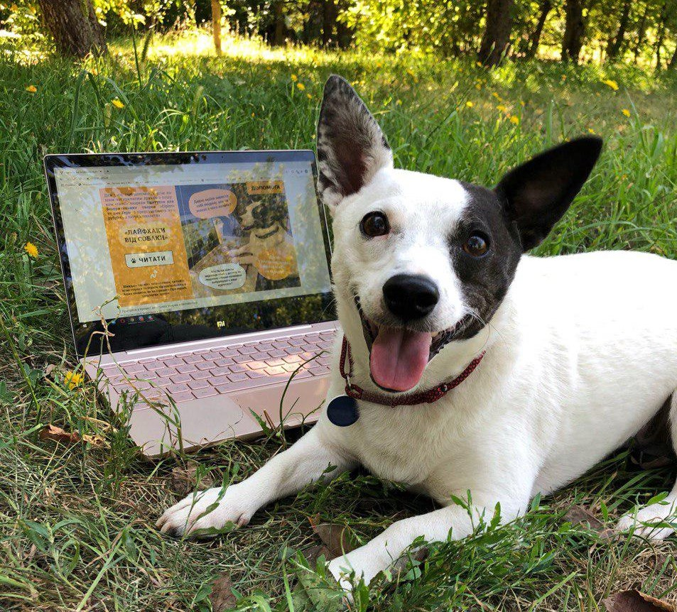 За вилучені кошти з продажу книжок реконструюють притулок для тварин на Київщині - Тварини, собаки, притулок для тварин, захист тварин, благодійність, безпритульні тварини - 03 syryus2