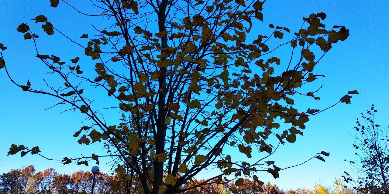 Погода 6 грудня на Київщині: мінлива хмарність, без істотних опадів - прогноз погоди на вихідні, прогноз погоди, погодні умови, погода на вихідні, погода - 06 pogoda2