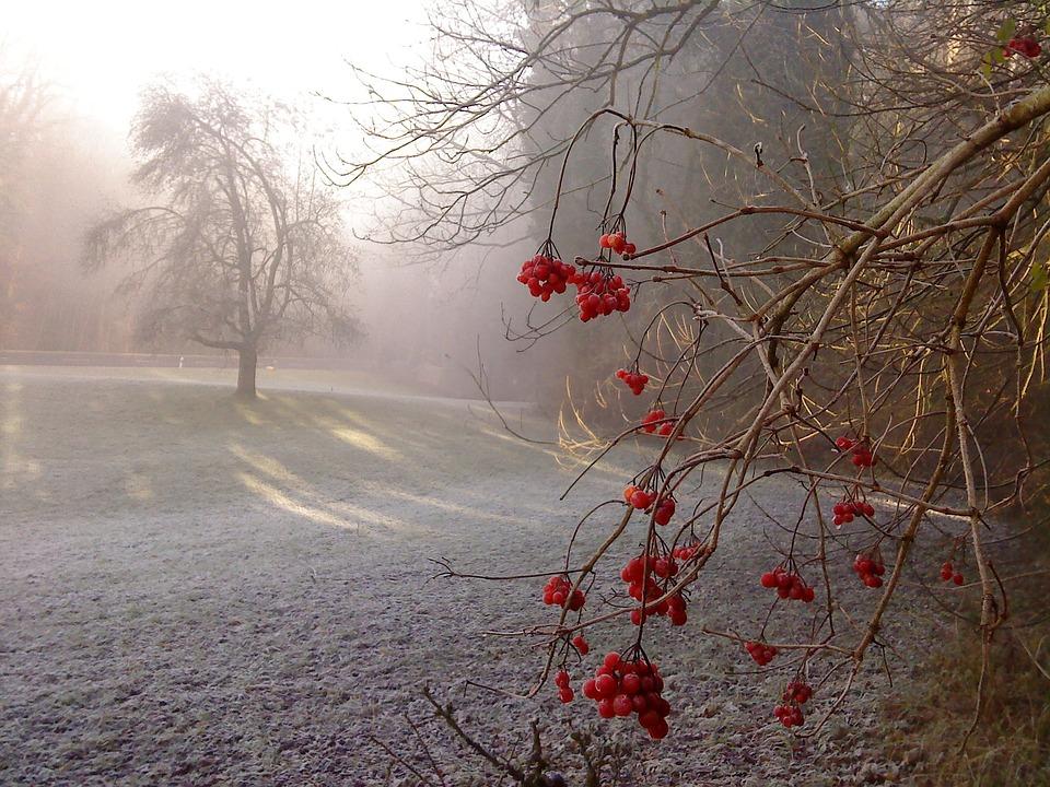 7 грудня на Київщині: опадів не очікується, вночі –8°С - температура повітря, прогноз погоди, погодні умови, погода - 07 pogoda2