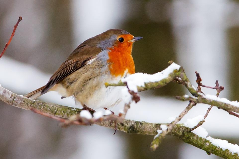 «Нагодуй птахів взимку»: 8 грудня в Україні стартує еко-акція - Птахи, Птах, зоозахист, Зима, Екологічна акція - 07 ptytsa