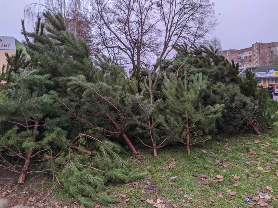 На ялинкових ринках Обухівщині вилучили незаконно зрубані дерева - Ялинки, незаконний продаж, незаконне вирубування лісу - 132201168 2257389127739185 4044787871745945381 n