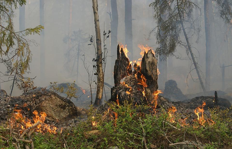В Україні збільшать штрафи за пожежі в екосистемах - штрафи, пожежі в екосистемах, пожежі, законопроєкт, Верховна Рада - 16 pozhar