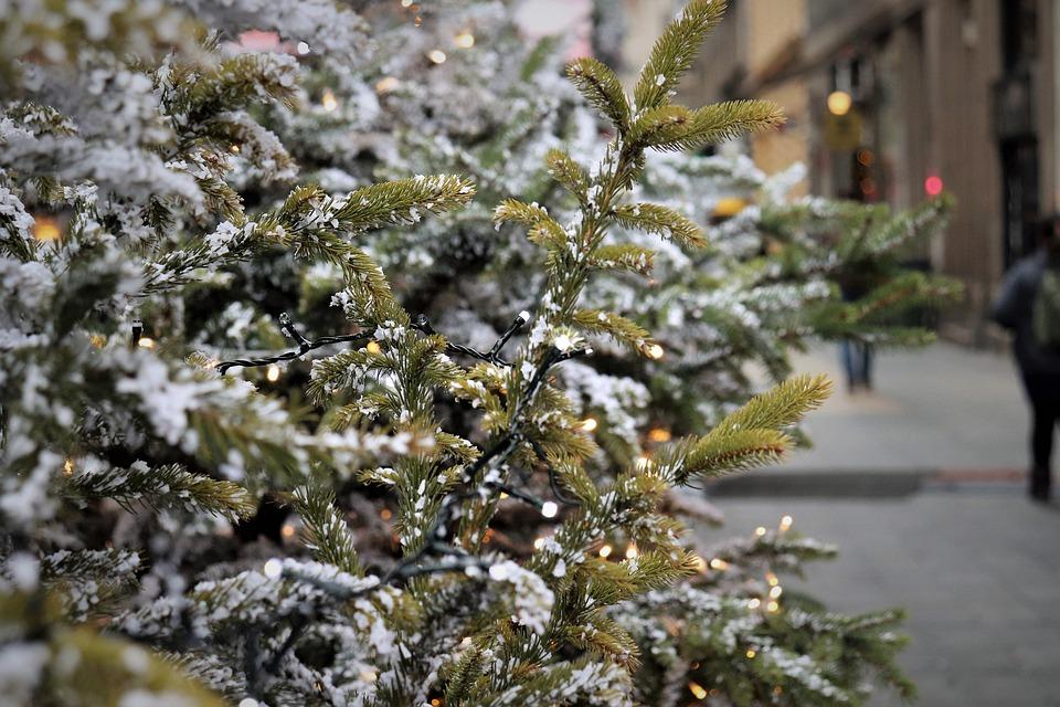 Де купити легальну ялинку у Києві: сьогодні відкриваються офіційні ярмарки - Ялинки, ялинка, новорічне дерево, новорічна ялинка, Новий рік - 17 elka2