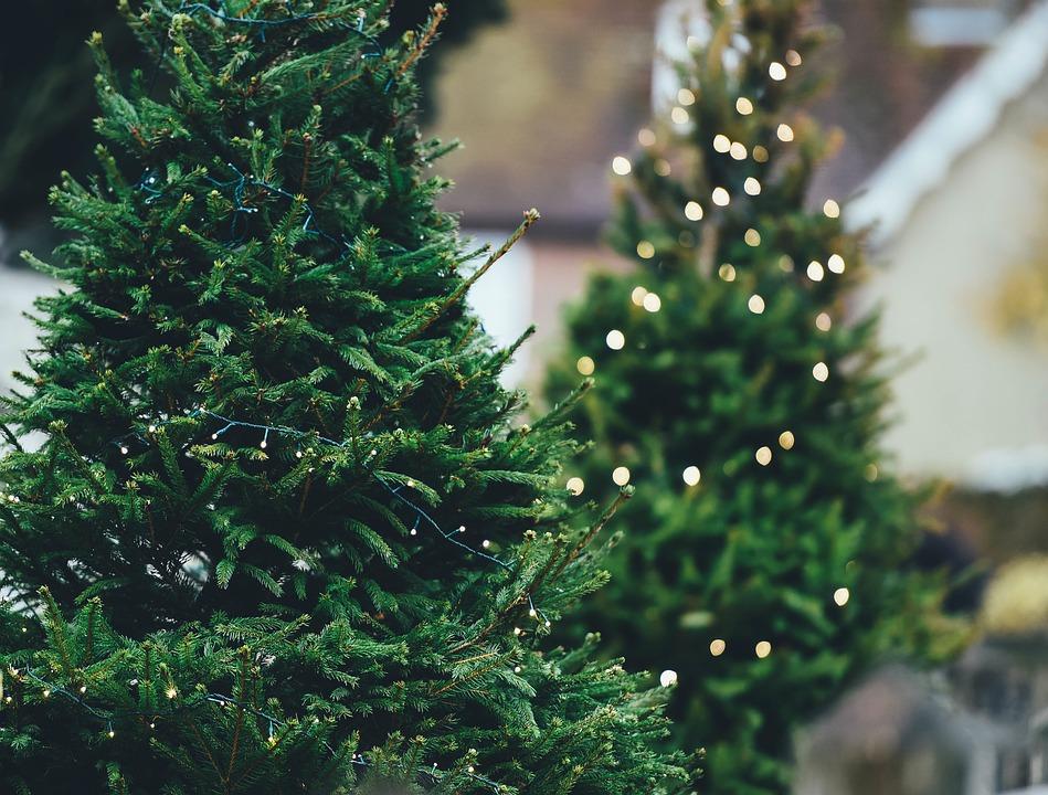 Де купити легальну ялинку у Києві: сьогодні відкриваються офіційні ярмарки - Ялинки, ялинка, новорічне дерево, новорічна ялинка, Новий рік - 17 elka3