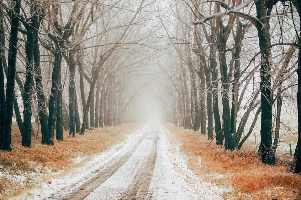 Хмарно та туман: погода 18 грудня на Київщині - туман, температура повітря, прогноз погоди, погода, Зима - 18 pogoda2