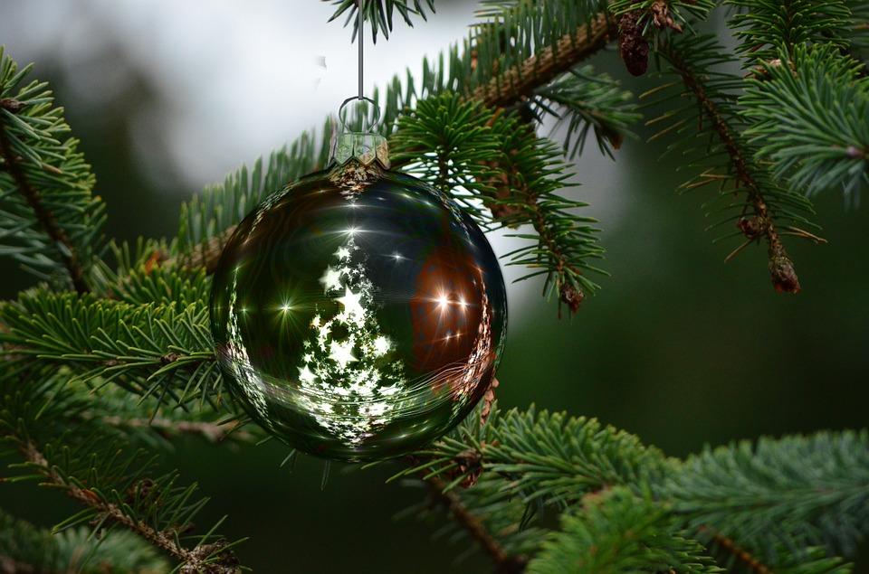 Як обрати новорічну ялинку? - Ялинки, ялинка, новорічне дерево, новорічна ялинка, Новий рік - 24 elka2