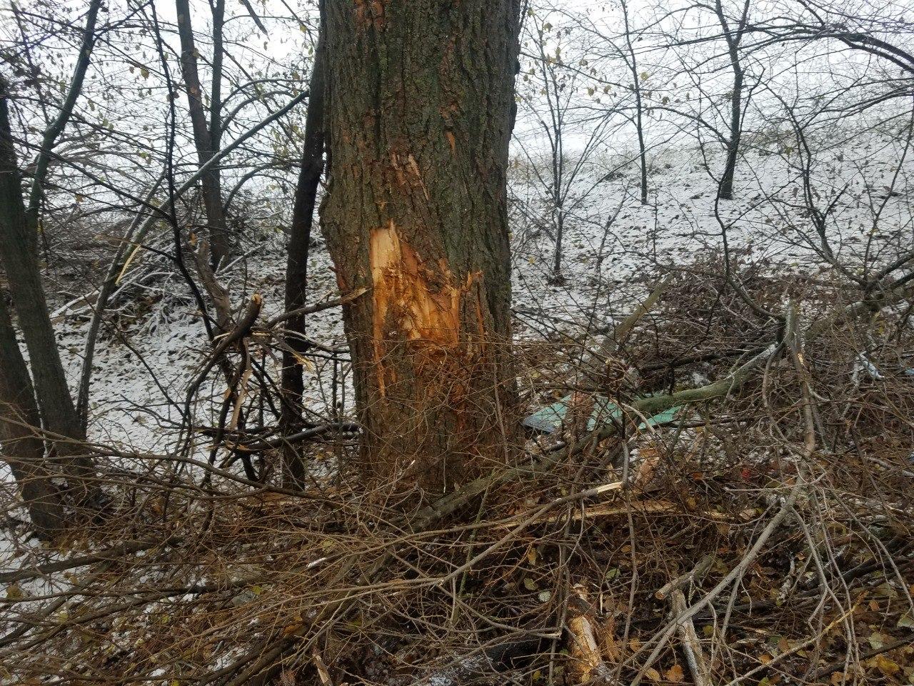 ДТП на Бориспільщині: від удару об дерево двигун авто опинився у салоні - дорога, автомобіль - DTP pid Boryspolem derevo