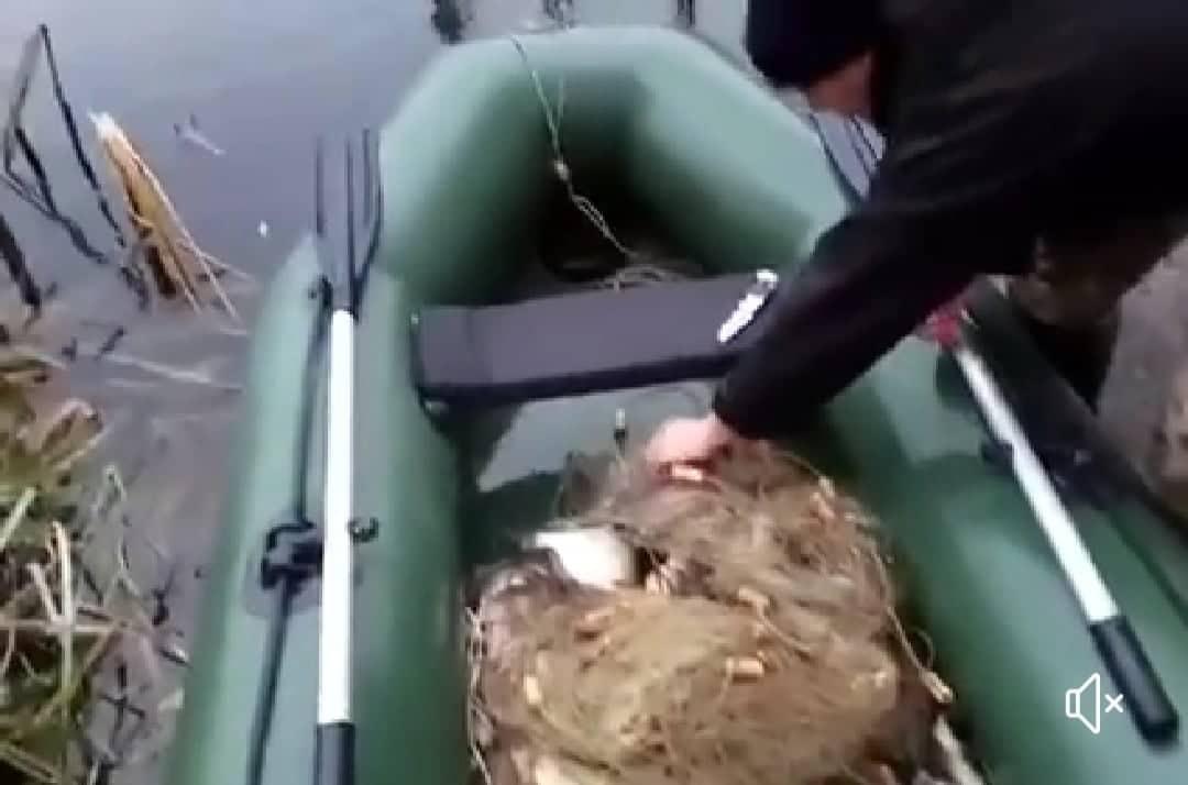 На Вишгородщині знайшли «анонімні» браконьєрські сітки - Київський рибоохоронний патруль, Вишгородський район, браконьєри - SITKY