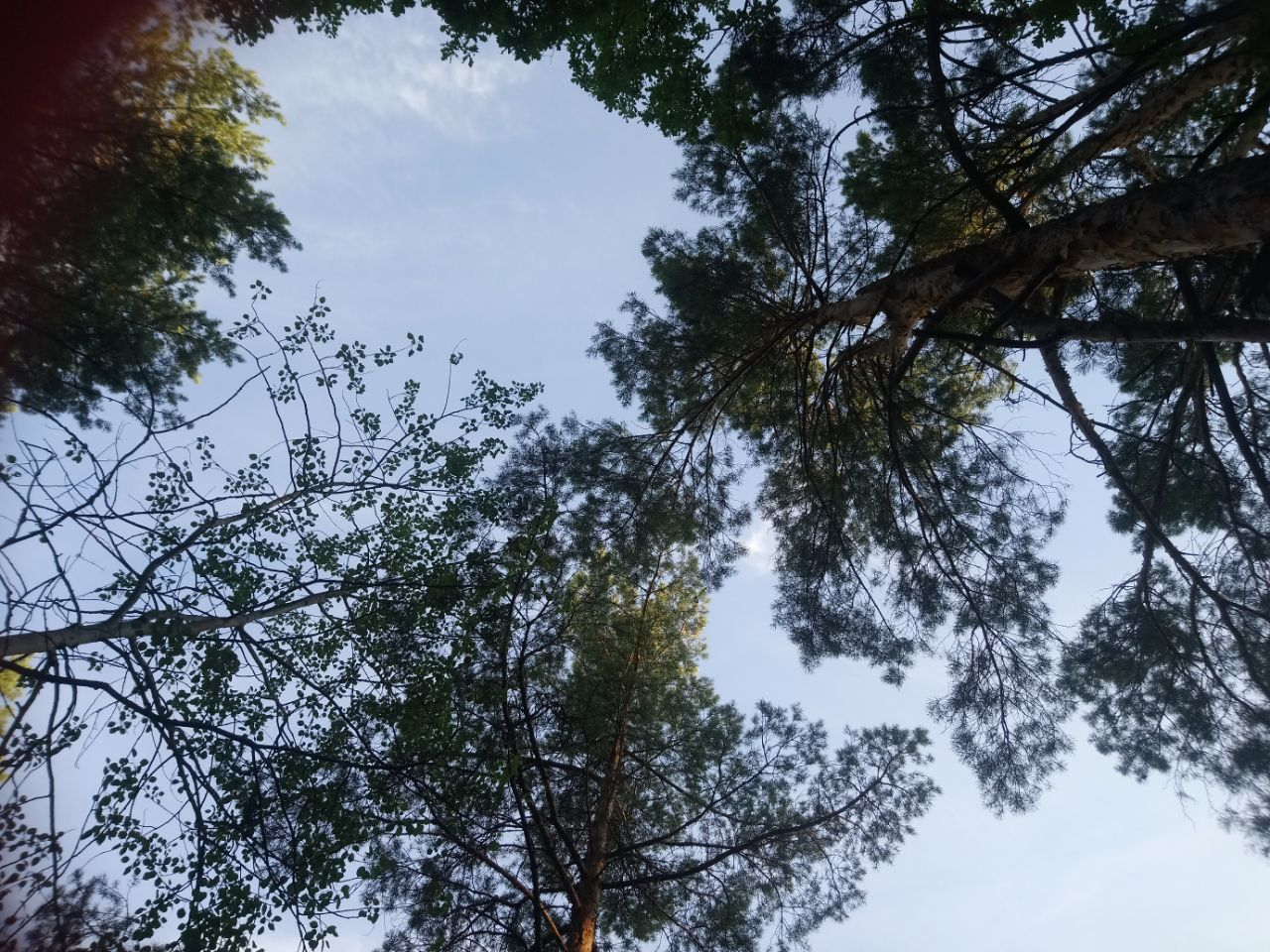 За десять років площа всихання лісів в Україні збільшилась вдвічі - лісовий фонд, ліси, ліс, Дерева - photo5258401599947124174