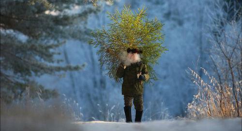 Київські ялинки оброблять речовиною, яка відлякуватиме викрадачів - штраф, новорічна ялинка, вирубка - unnamed 5