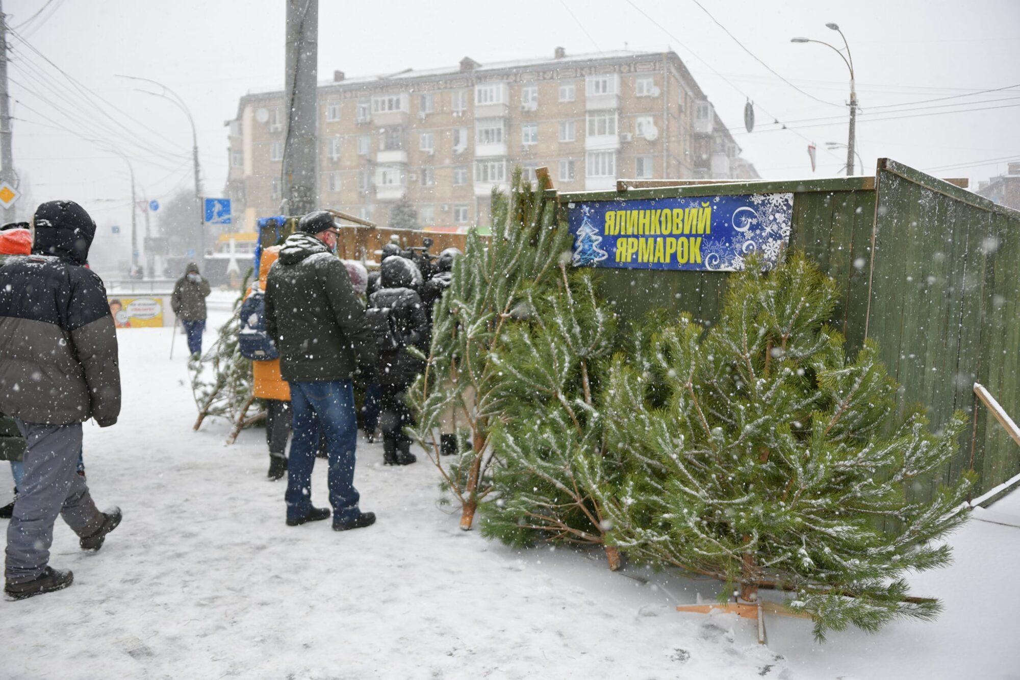 Майже 430 тис. грн збитків завдали ялинкові браконьєри - Ялинки, ялинка, новорічне дерево, новорічна ялинка - 09 yalynky 2000x1333