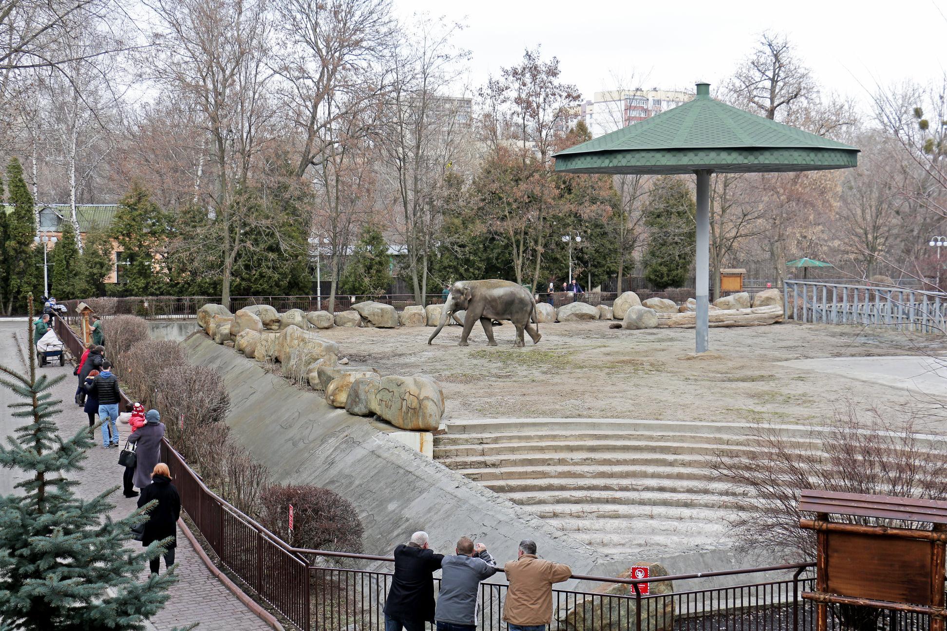 На час локдауну відвідування Київського зоопарку буде дешевшим - Тварини, локдаун, зоопарк - 138427507 3737412189635280 6377024277043808341 o