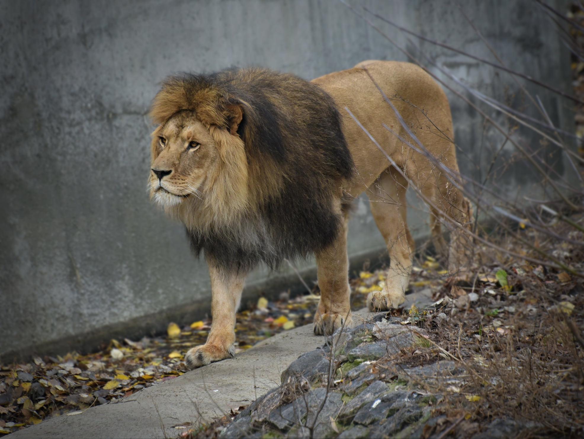 На час локдауну відвідування Київського зоопарку буде дешевшим - Тварини, локдаун, зоопарк - 138945098 3737410856302080 8387431196058852426 o