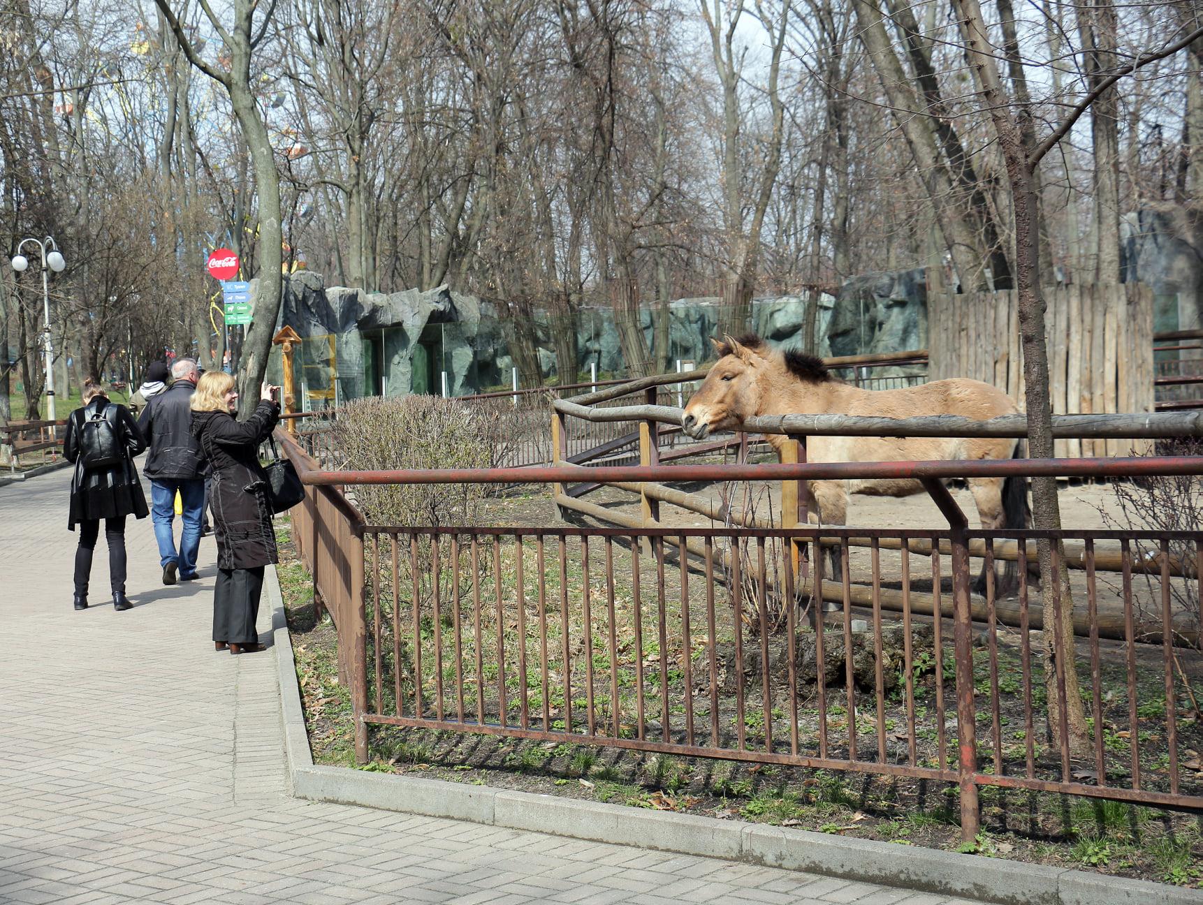 На час локдауну відвідування Київського зоопарку буде дешевшим - Тварини, локдаун, зоопарк - 139083463 3737412136301952 1425791081220780022 o