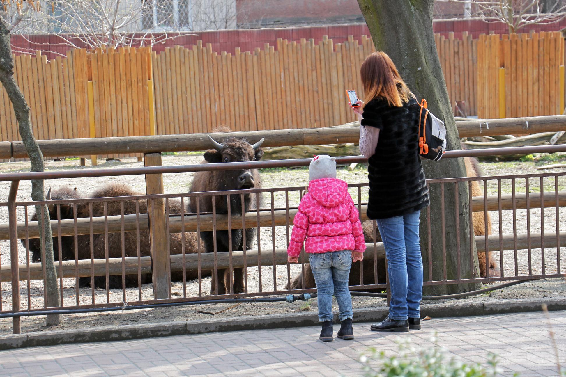 На час локдауну відвідування Київського зоопарку буде дешевшим - Тварини, локдаун, зоопарк - 139119263 3737412102968622 2708013524124619337 o