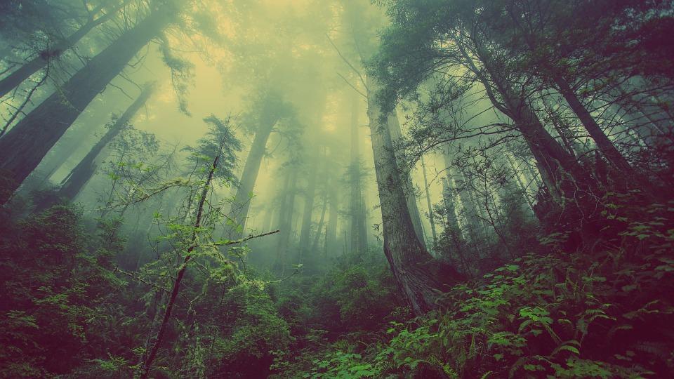За 2020 рік в лісах України висадили більше 160 млн сіянців - лісовий фонд, ліси, ліс, Держлісагентство, Дерева - 18 les