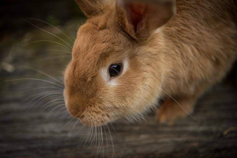 В Україні заборонили продаж косметики, що тестується на тваринах - Тварини, зоозахист, зоозахисники, захист тварин - 21 kosmetyka