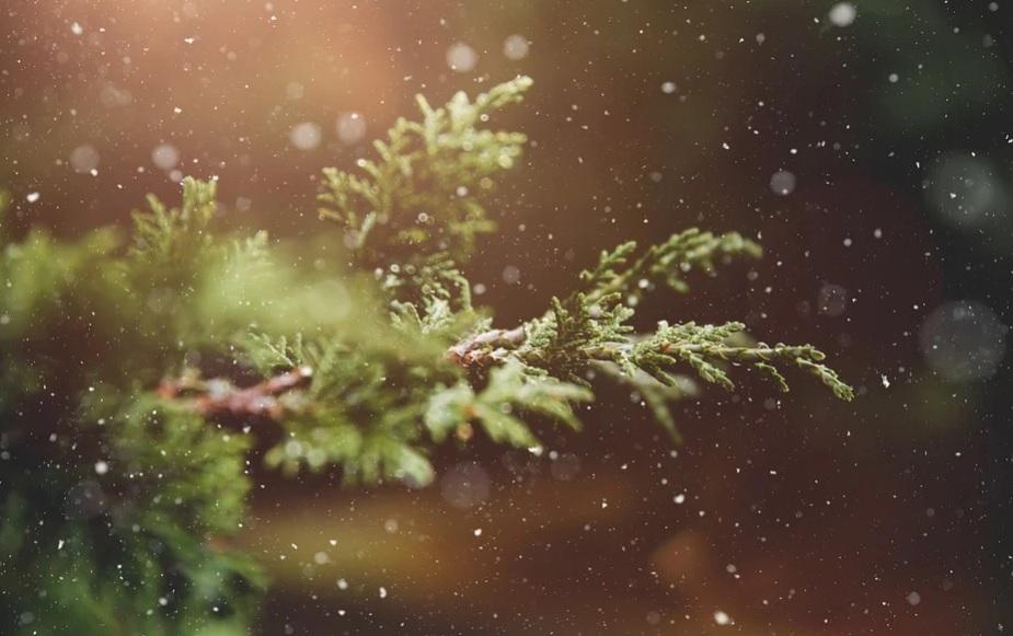 28 січня на Київщині сніжитиме - сніг, прогноз погоди, погода, Зима - 28 pogoda2