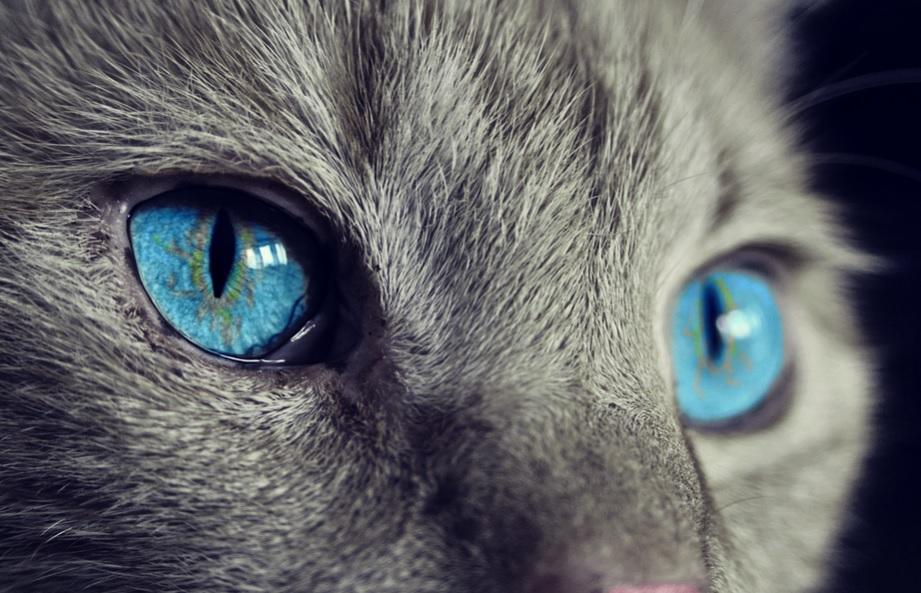 Через сказ у кішки в Києві запроваджують карантин - Тварини, столиця, сказ, карантин - 28 skaz
