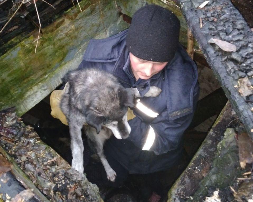 У Фастові ДСНС-ники врятували собаці життя - тварина, собака, порятунок, ДСНС Київщини - 34567