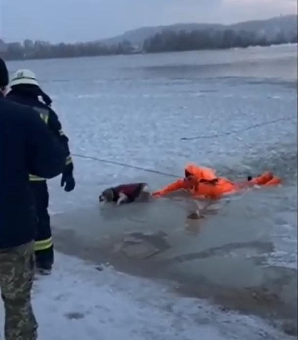 Порятунок чотирилапого: у Києві собака провалився під кригу (відео) - собака, порятунок життя, крига - Bezymyannyj 10