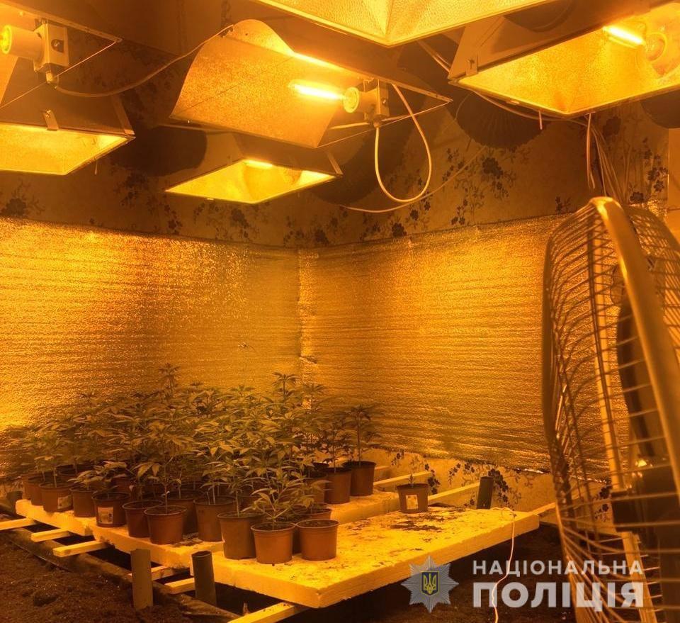 На Кагарличчині наркоаграрій вирощував коноплі - поліція Київщини, Наркотичні речовини, кримінал, коноплі, київщина, Кагарлицький район - Kagar nark 1