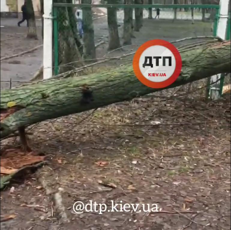 У Києві стара тополя завалилась біля школи - школа, дерево, впало дерево - Screenshot 16 1