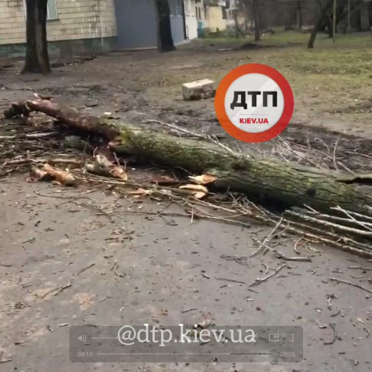 У Києві стара тополя завалилась біля школи - школа, дерево, впало дерево - Screenshot 17 1