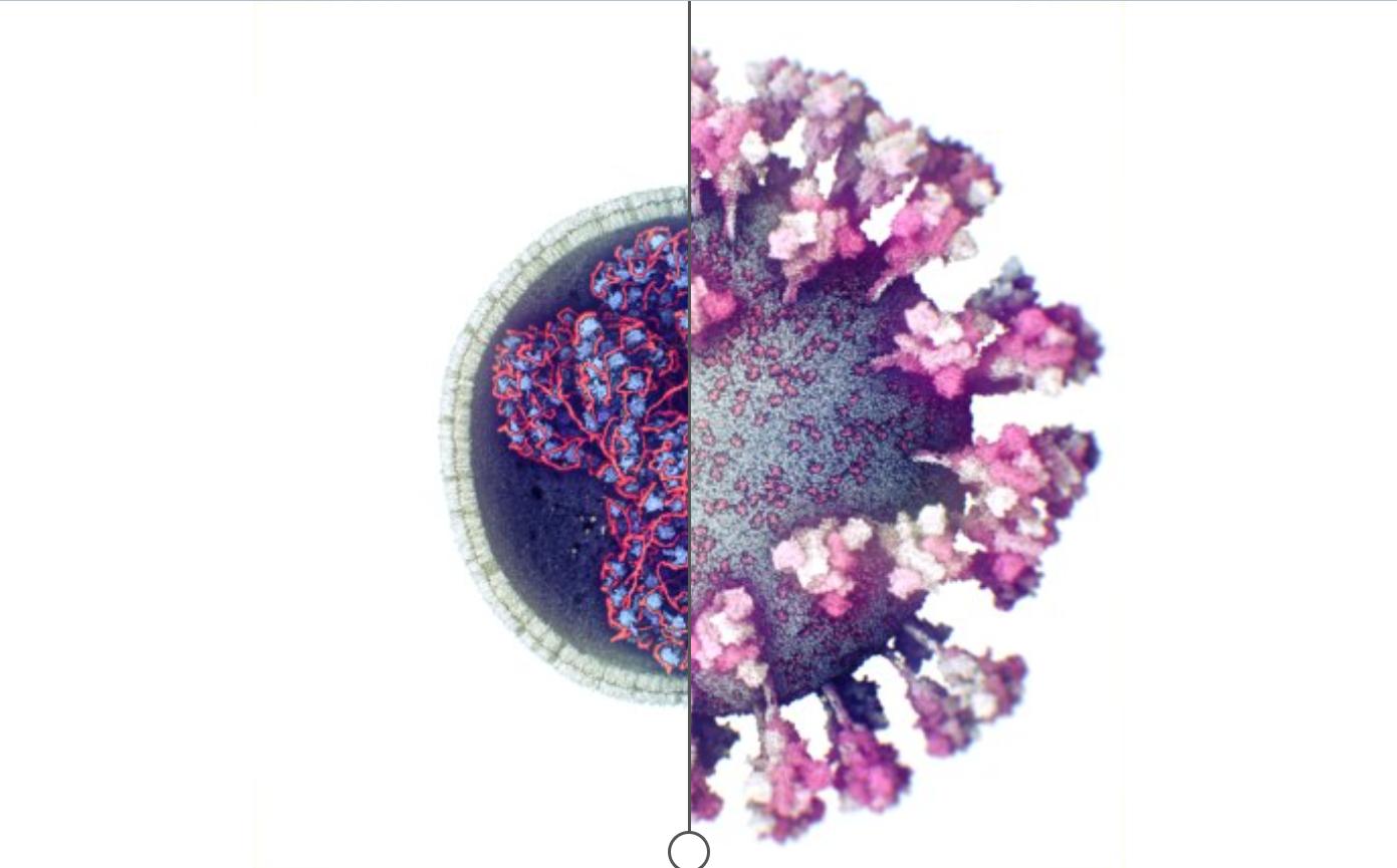 З'явилося 3D-зображення коронавірусу SARS-CoV-2 - фотографія, науковці, коронавірус, вчені - Snymok ekrana 859