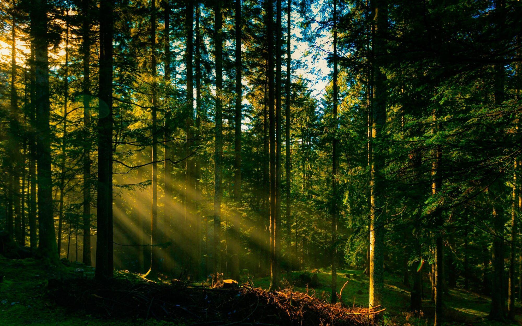 Збільшився природно-заповідний фонд Київщини - КОДА, заповідник, довкілля - Zapovid 2000x1250