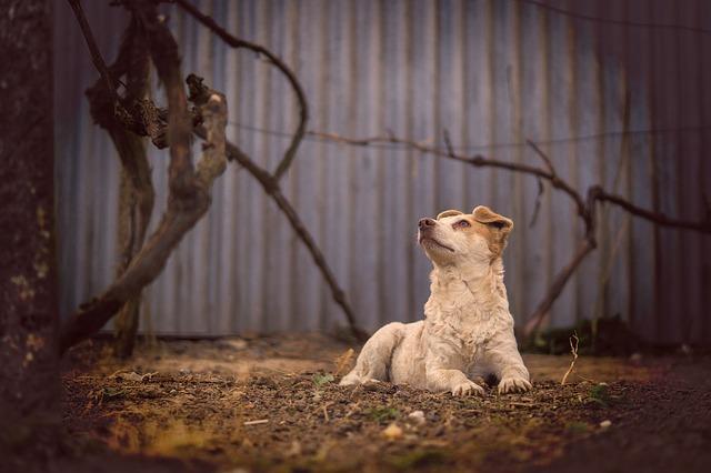 Справа догхантера: суд пояснив, чому виправдав Святогора - Тварини, суд, зоозахисники, вбивство - dog 1799144 640