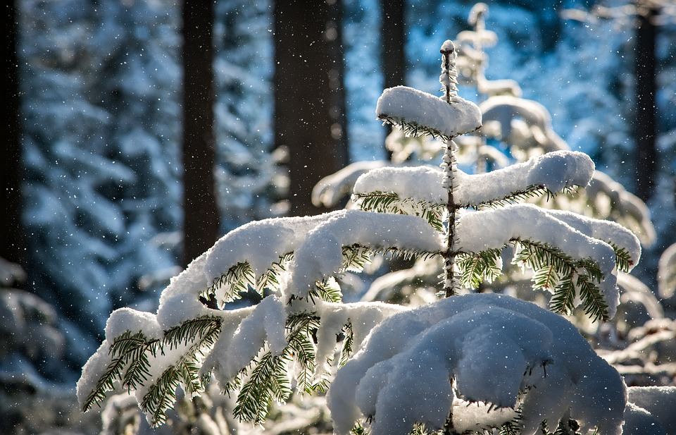 Через снігопад та ожеледицю на Київщині оголошено жовтий рівень небезпеки - снігопад, погода, ожеледиця, жовтий рівень небезпеки - 01 nebezpeka2
