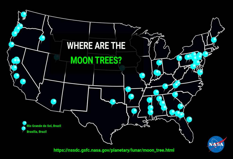 NASA опублікувало мапу «місячних» дерев - НАСА NASA, Місяць, зелені насадження, Дерева, NASA - 09 lunnye derevya
