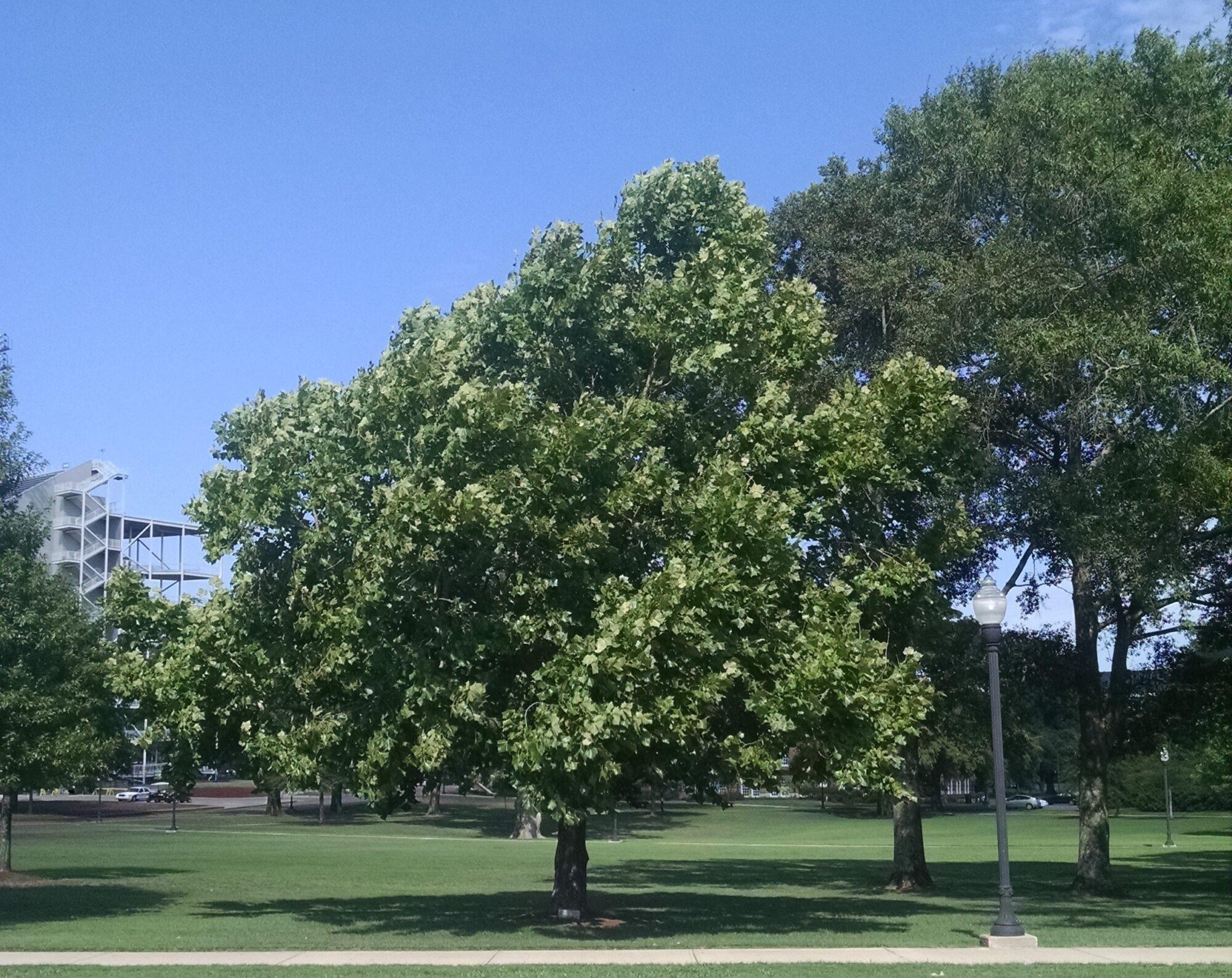 NASA опублікувало мапу «місячних» дерев - НАСА NASA, Місяць, зелені насадження, Дерева, NASA - 09 lunnye derevya2 2000x1587