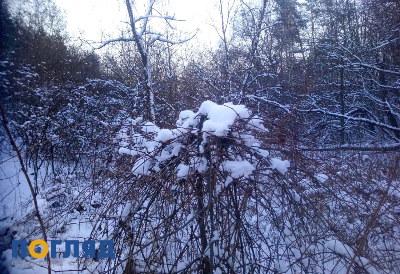 На Київщині 11 лютого очікується сніг з дощем - сніг, прогноз погоди, погода, мокрий сніг - 10 zemly