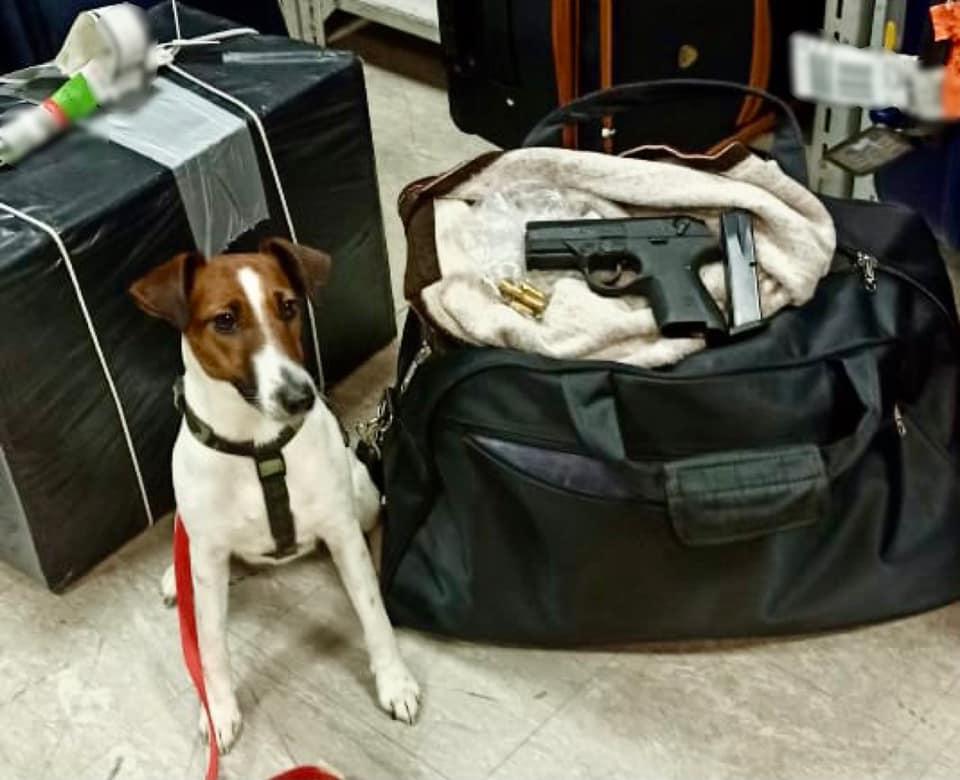 У «Борисполі» в одного із пасажирів виявили пістолет з набоями - Київська митниця, зброя, аеропорт «Бориспіль» - 147356335 3865379916856108 7555312980306722187 n
