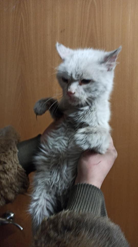 На Переяславщині нелюди викинули пса і котів на засніженій трасі - Тварини, собака, сніг, коти - 148010652 2855062234813264 1747611702841067350 n