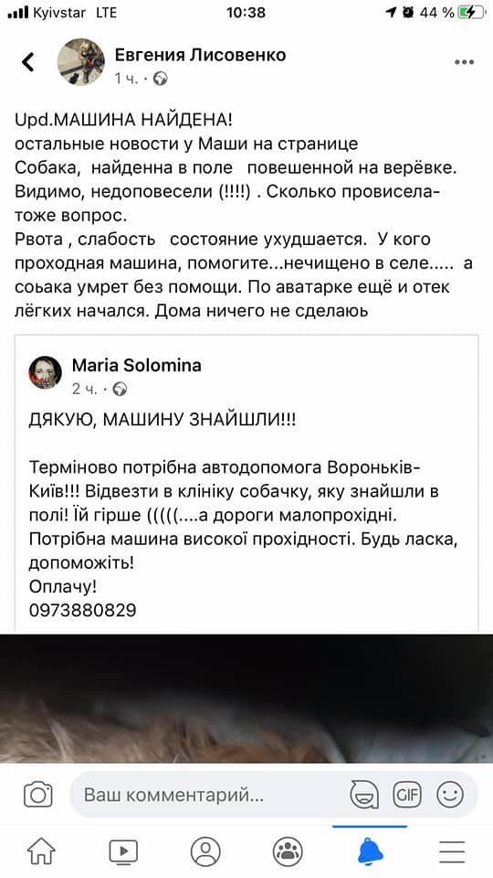 На Бориспільщині нелюди прив'язали та покинули собаку на засніженому полі - собака, порятунок життя - 149466169 5452579221426368 8926117983034718204 n