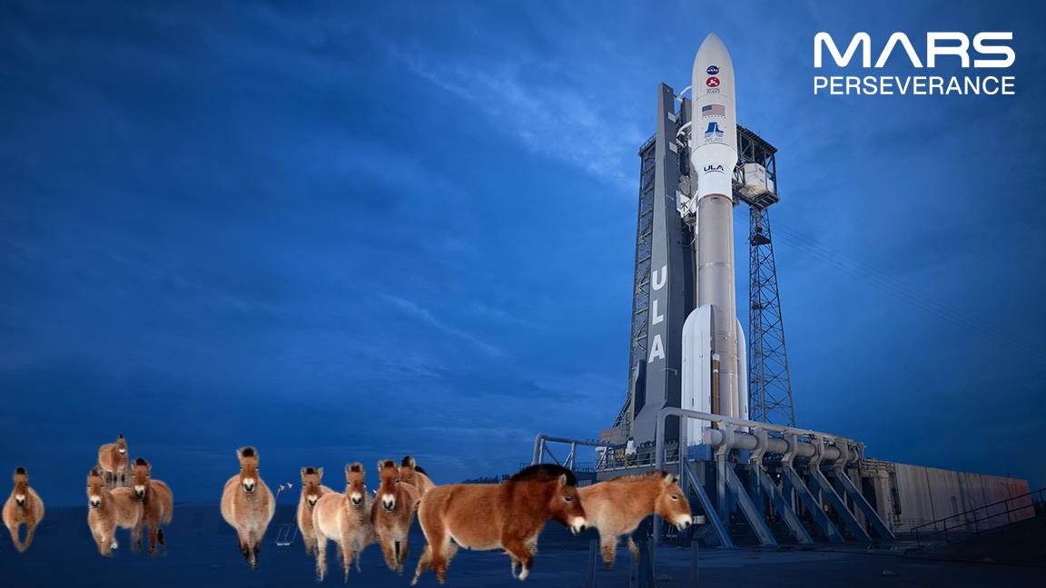Українські коні Пржевальського «побували» на Марсі - Чорнобильський заповідник, НАСА NASA, Марс, Коні - 22 koni Przhevalskogo2