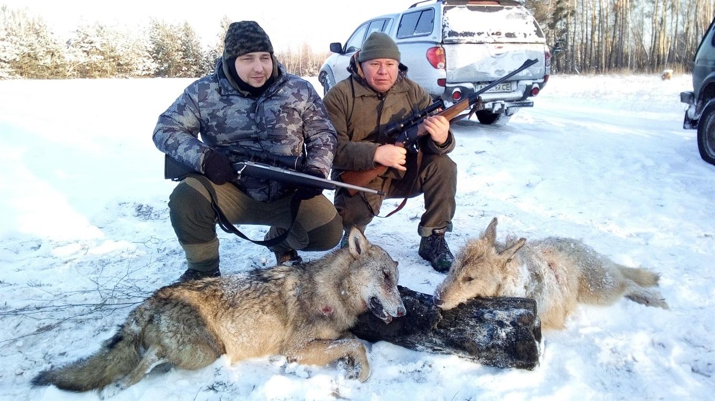 На Переяславщині відстрілюють вовків - Переяслав, лісництво, дикі тварини - 2bjBGzenrT9GEsdd71HG