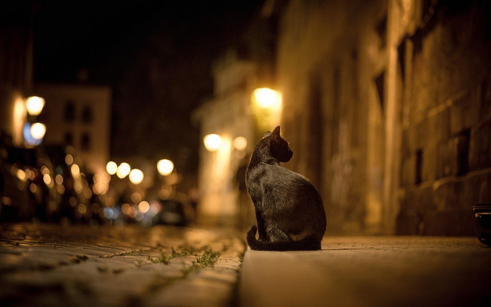 Сьогодні у Європі святкують Міжнародний День кота - тварина, коти, Європа - Black cat at street night 1680x1050