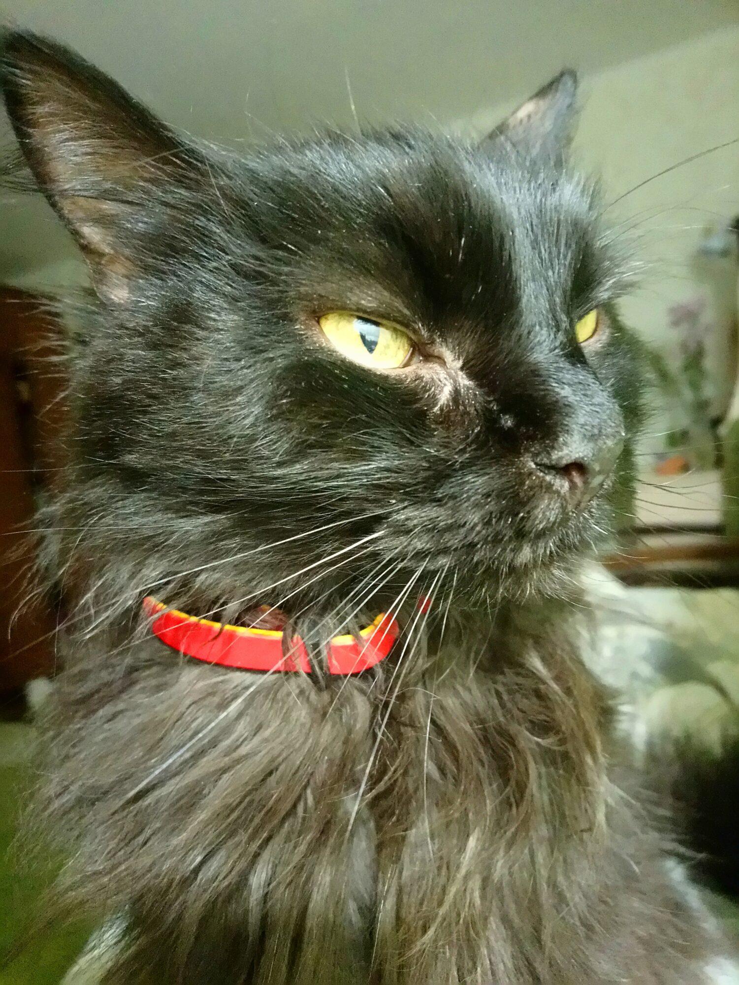 Сьогодні у Європі святкують Міжнародний День кота - тварина, коти, Європа - DSC 0835 1501x2000