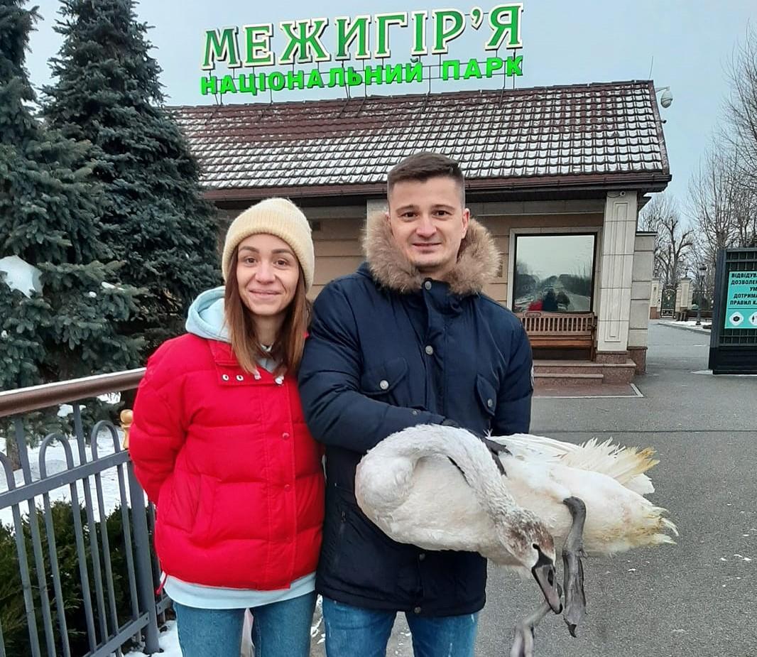 У притулку для лебедів – уже 50 проблемних птахів - тварини межигір'я, лебеді, зоозахист, Вишгородський район - Lebid1 obr