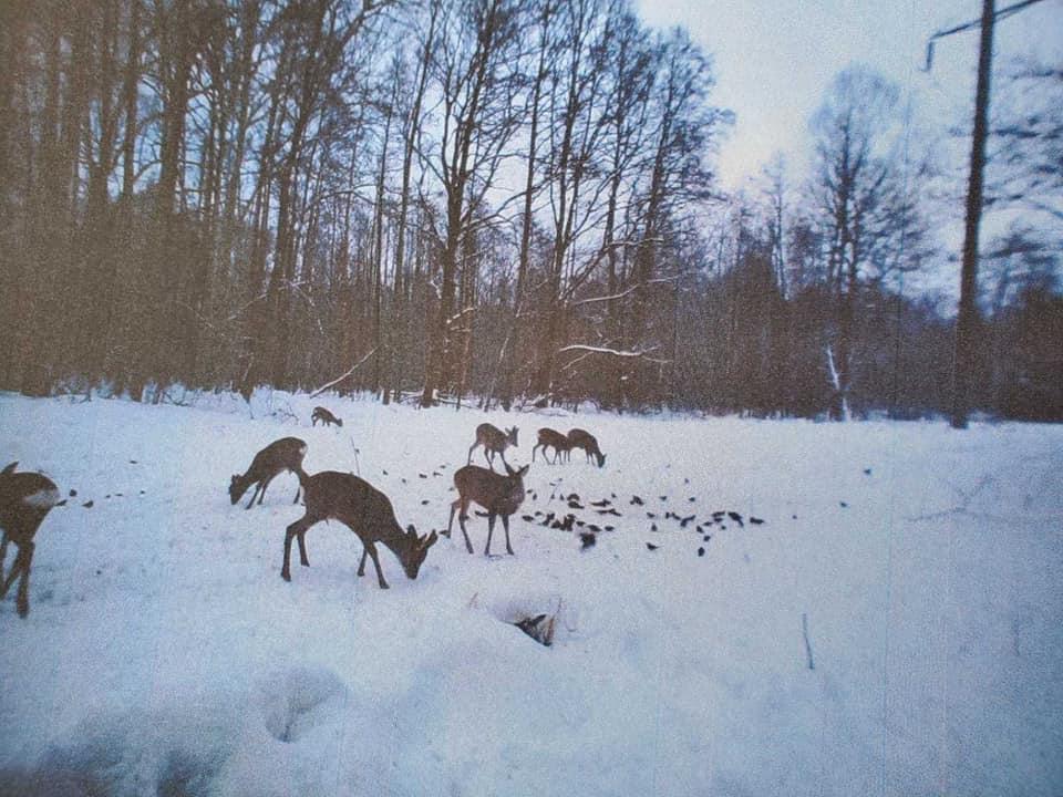 На Вишгородщині здійснюють таксацію диких тварин - довкілля, дикі тварини, Вишгородський район - Vysh Mys2