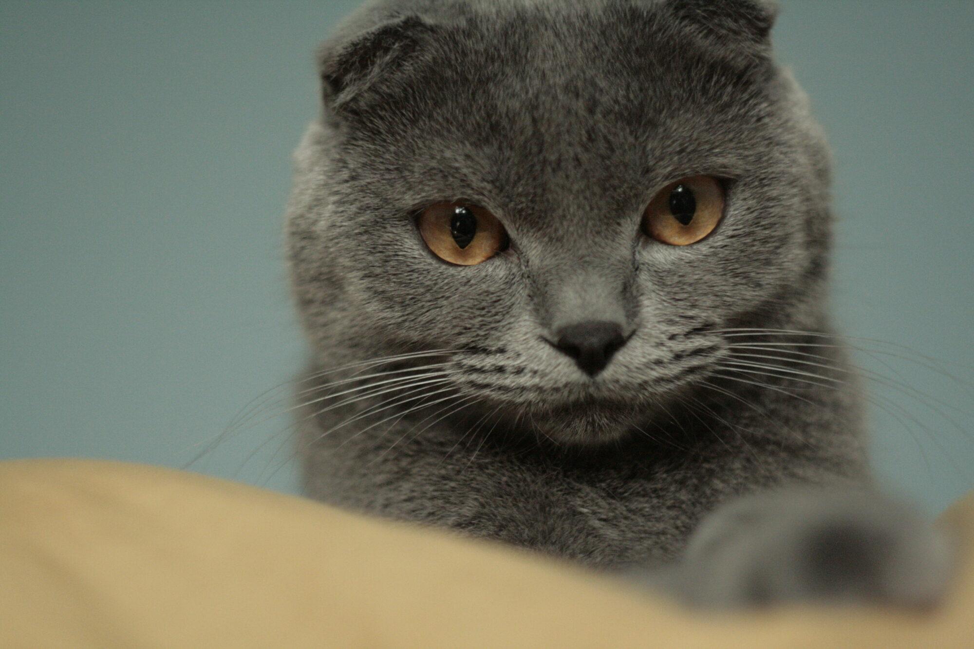 Сьогодні у Європі святкують Міжнародний День кота - тварина, коти, Європа - Yzobrazhenye007 2000x1333