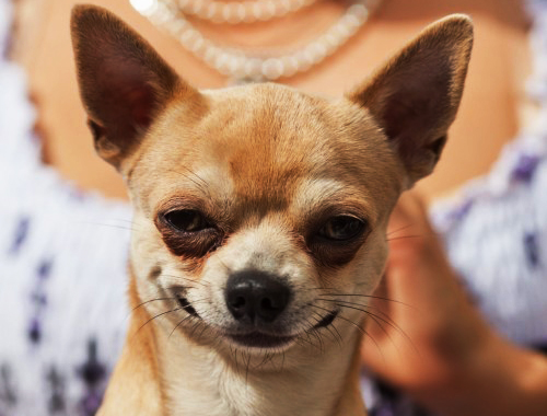 Увага! Анонс Всеукраїнських дитячих конкурсів для порятунку тварин - Тварини, конкурс, безпритульні тварини - d07ee4f537f9d9218654e9697fd43cde