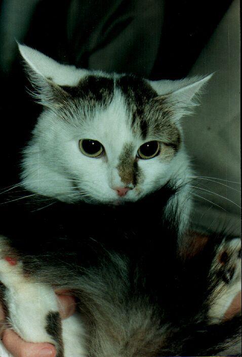 Сьогодні у Європі святкують Міжнародний День кота - тварина, коти, Європа - foto013